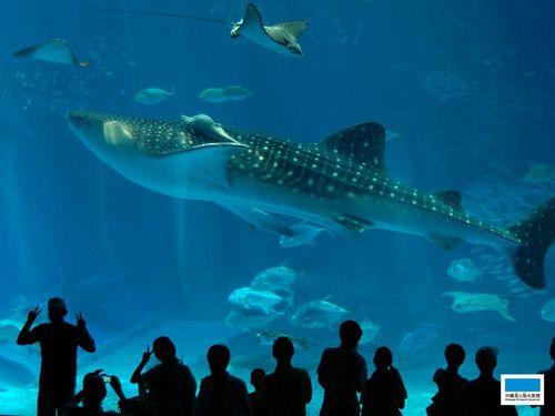【美ら海水族館付き】レジャー・観光まんきつステイプラン≪素泊り≫