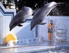 カップル&ファミリーにおすすめ!しながわ水族館チケット付きプラン レイトチェックアウト12時!(食事なし)