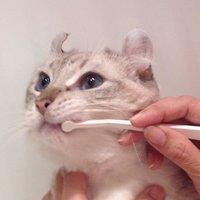 【嫌がらない!】猫用歯ブラシのおすすめ人気ランキング10選