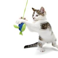 猫じゃらしのおすすめ人気ランキング7選