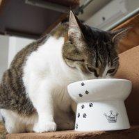 猫用食器のおすすめ人気ランキング10選
