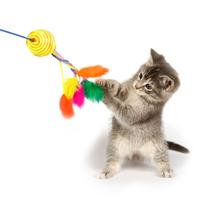 【プロのキャットシッターが教える】猫用おもちゃのおすすめ人気ランキング20選