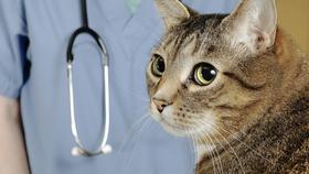 徹底比較!猫におすすめの最強ペット保険13選【2017年最新版】