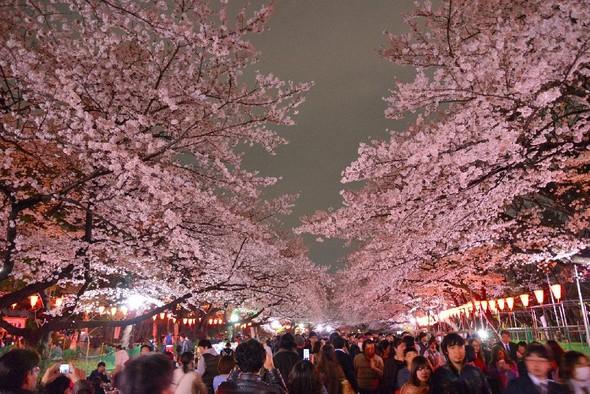「上野恩賜公園 花見」の画像検索結果