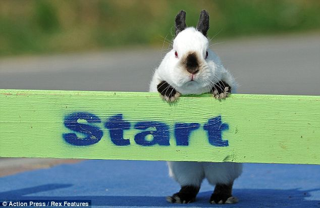 http://www.animal-space.net/2011/04/meet-showjumping-rabbits.html