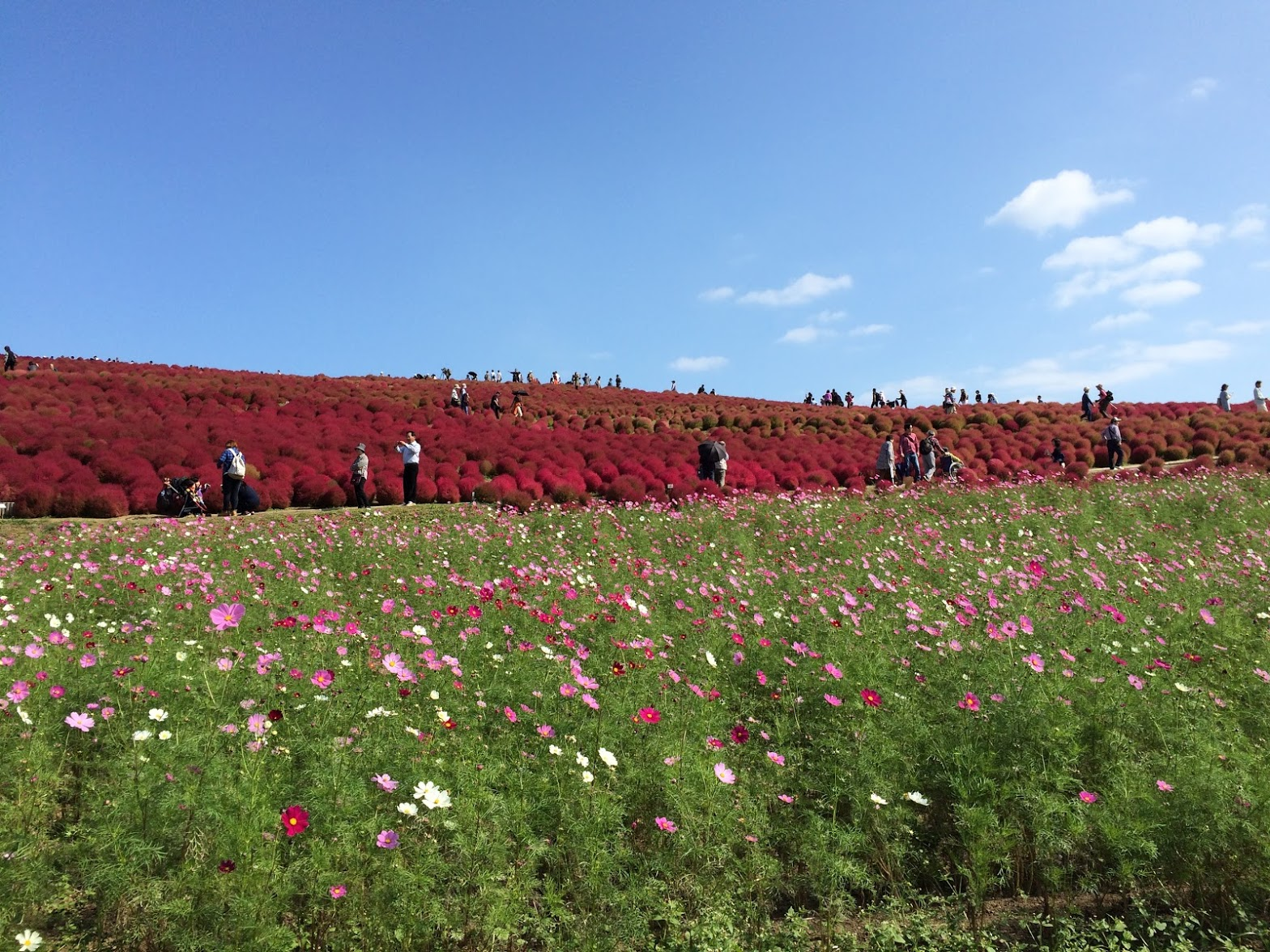 Photo by Asuka Yuikawa