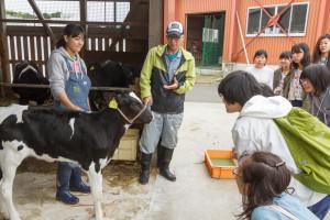 乳牛研究会では、活動のひとつとしてこの哺育舎にいる仔牛たちのお世話をしています。こんなに近くで仔牛を見たのは初めて!という方もいるのではないでしょうか。
