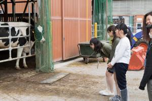 こちらの育成牛舎の牛のお世話も乳牛研究研究会の活動のひとつです。先ほどとは違って大人の牛を前にこんなに大きくなるの?!と驚いている方もいらっしゃいました。それもそのはず。実は大人の牛の体重は700キロもあるんですよ!