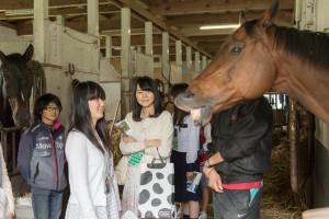 一方こちらは牛舎ではなく、馬の厩舎で馬術部の見学です。表情豊な馬たちに思わず笑顔がこぼれます。