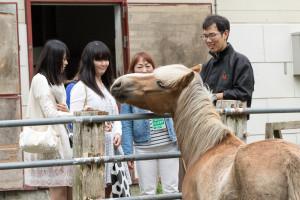 馬術部では馬だけではなくポニーも1頭飼っています。その名も「わっふる」。わっふるは小学校や老人ホームなどでのボランティア活動も行っています。