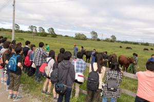 乳牛の牛舎の後は肉牛の牛舎も見学してしまいました。こちらも防疫の関係から中には入れませんので、学生さんが近くまで牛を連れてきてくれました。本学では黒毛和種と日本短角種の2種類を飼育しています。