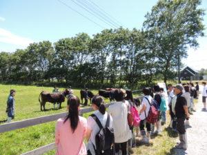 乳牛の牛舎を後にして次は肉牛の牛舎へ。本学では黒毛和種と日本短角種の2種類を飼育しております。こちらの牛舎では循環農学類の3年生と4年生の在学生が牛の紹介をしてくれました。
