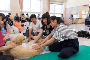 犬は全て獣医保健看護学類で飼っている学類犬です。獣医保健看護学類の学生は、2年生になると犬のお世話がはじまります。朝・昼・夜の散歩とご飯、ブラッシングなどお世話は大変ですが、いつでも動物に触れられる環境が大切なのです。