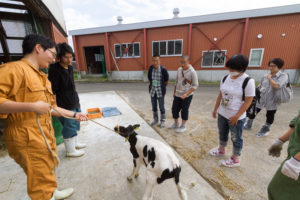 ここからは各イベントの様子を見てみましょう。こちらは酪農生産ステーションの見学の様子。つなぎを着ているのは本学のサークル、「乳牛研究会」の皆さんです。乳牛研究会では哺育舎の仔牛たちのお世話をしています。間近でみる仔牛に高校生からは「可愛い~!!」との声が。