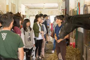 オープンキャンパス時のみ運行している巡回バスに乗って馬術部を見学することができます。活動は朝早くからありますが、馬が好きな人は入学後にぜひ見学に行ってみてください。