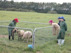 防疫の関係上、近づいて見ることはできませんでしたが、循環農学類の学生がこの施設について、飼育している家畜について説明をしてくれました。