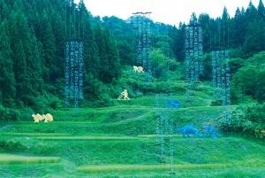 大地藝術祭最著名的作品:梯田,具體而微的表現新潟越後的地景精神。