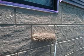 最後はトップコートを塗っていき壁に艶をだします!