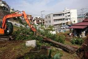 ユンボを使って大きな木を倒していきます!