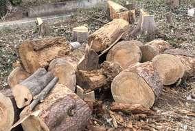 伐採した幹や枝