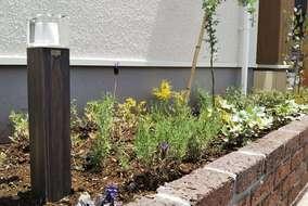 マルバユーカリ、ミモザアカシアを植栽、足元にグランドカバーを敷き詰めた花壇