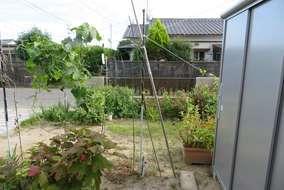 施工前の庭の状態になります。