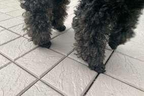 アルミ製の床の上に、汚れに強い加工がなされたプラスチック製の床化粧材を設置。