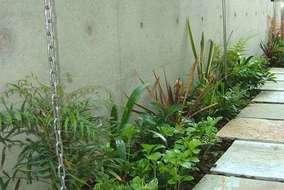低木・下草類は常緑で色どりを楽しめるものにしました