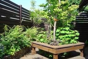 夏の植物の様子です。お客様のお世話のおかげで立派に育っています。