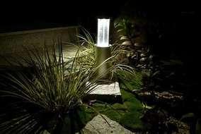 照明が夜の植物を美しく照らします