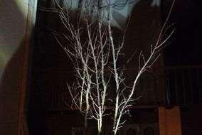 夜は後ろの白壁に樹木の影がうつります