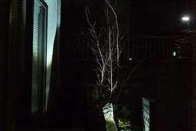 玄関の中から見た夜のお庭の様子です