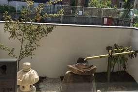 足湯から見た坪庭です。