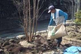 ヒメシャラの植栽中。 バーク堆肥・バーミキュライト・牛糞等の土壌改良を行ってます。