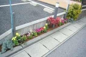 道路沿いの花壇です。 キンギョソウを植え彩りを良くしました。