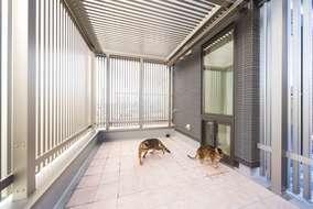 屋上のネコ専用サンルーフ。室内とは小さな窓で繋がっているので自由に行き来できる。