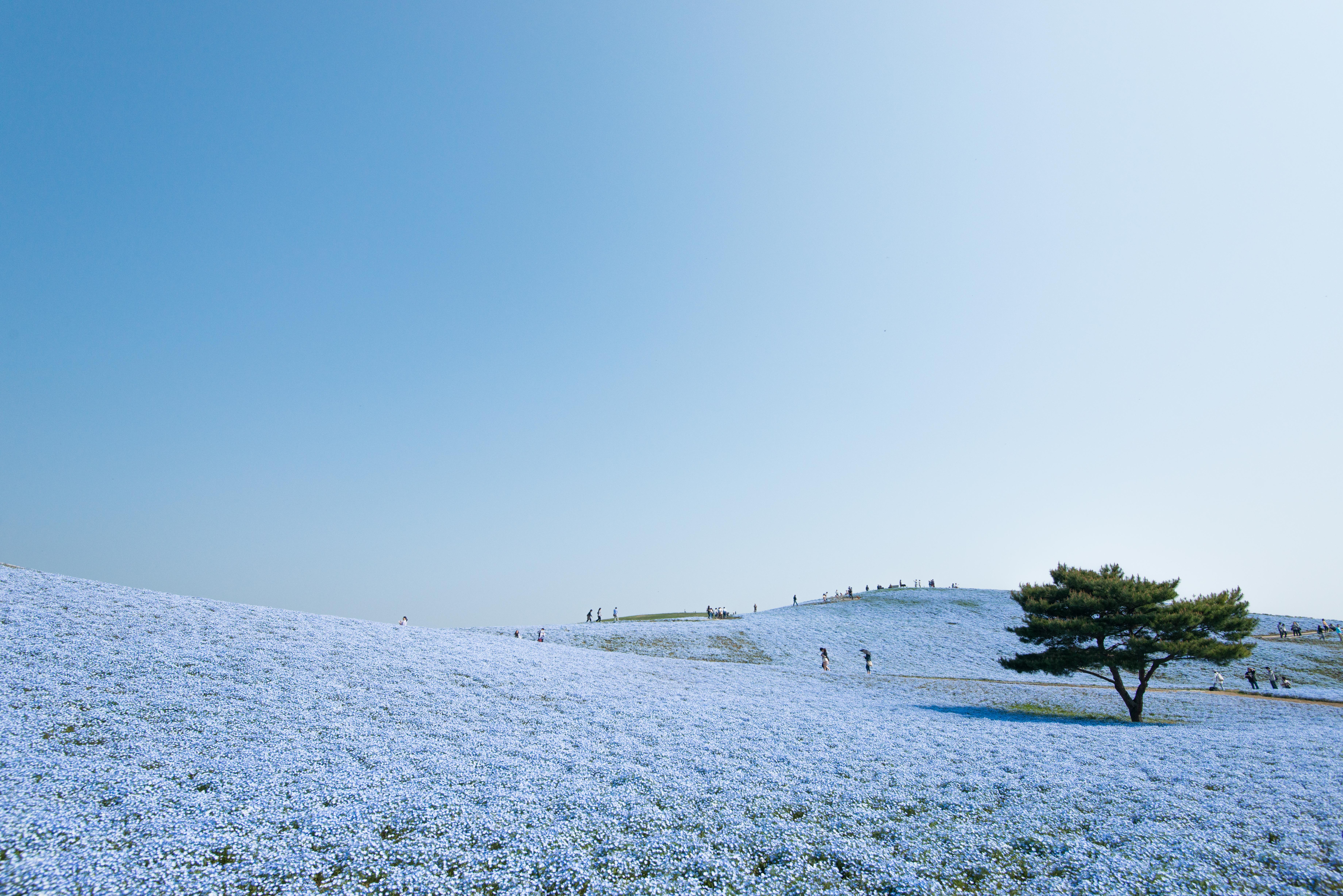 0425ひたち海浜公園_箱崎忠宏-3