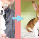 【さとおやライフVol.1】保護犬出身コルク、すくすくと育っています!