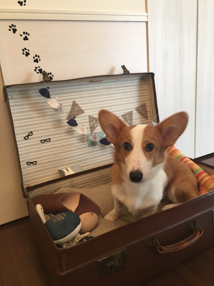 犬 DIY レイアウト 10