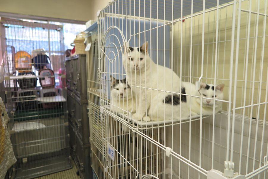 神奈川動物保護センターの猫3匹
