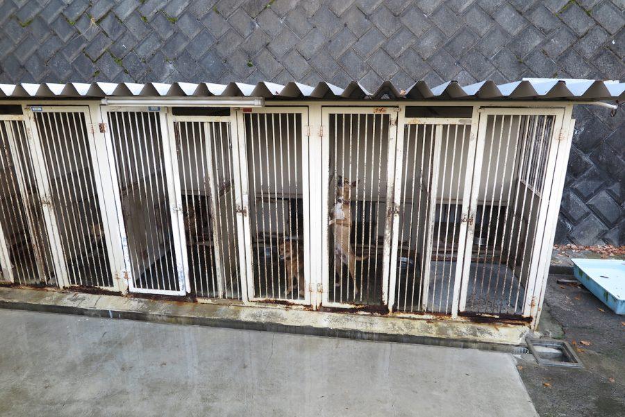 神奈川動物保護センターの犬の様子