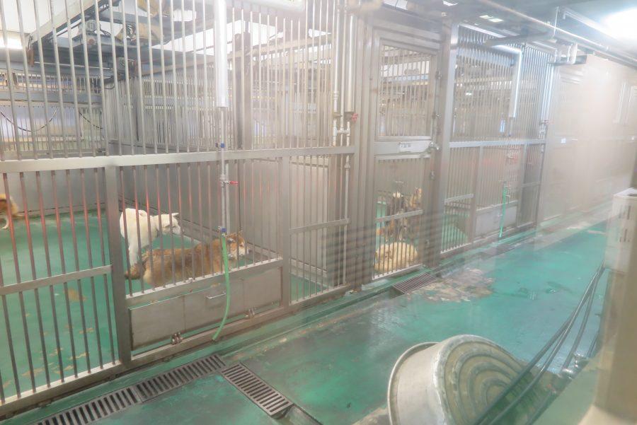 神奈川動物保護センター