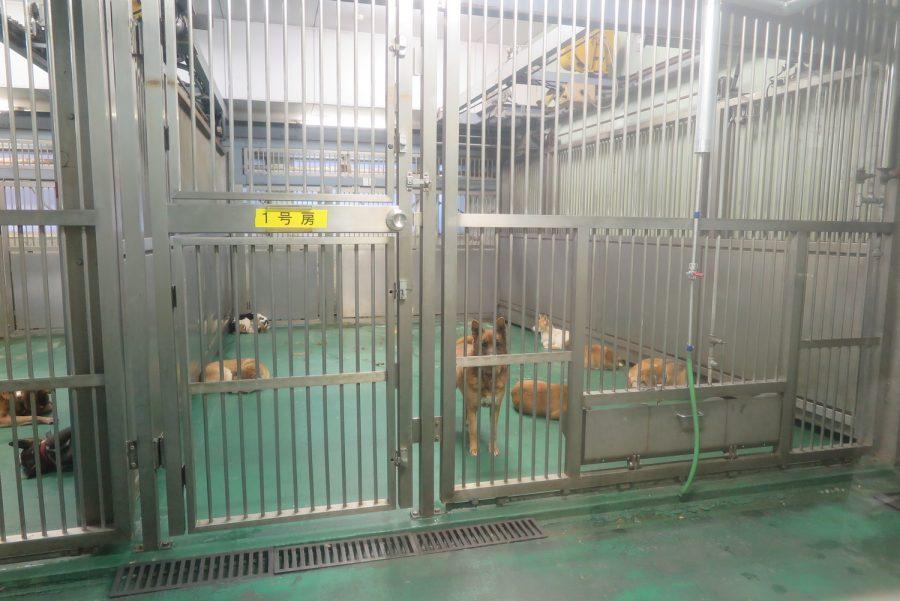 収容された数匹の犬