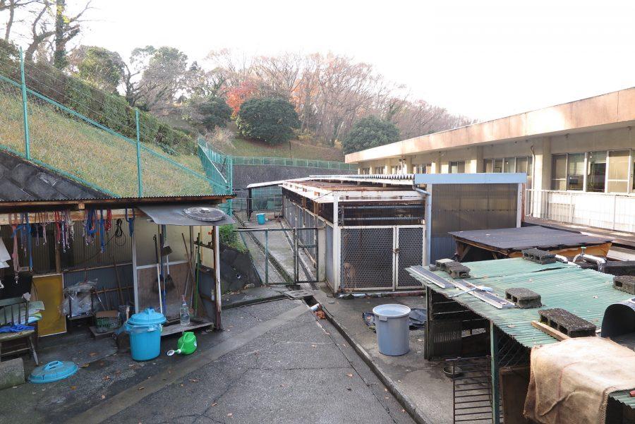 神奈川動物保護センター内のドッグラン