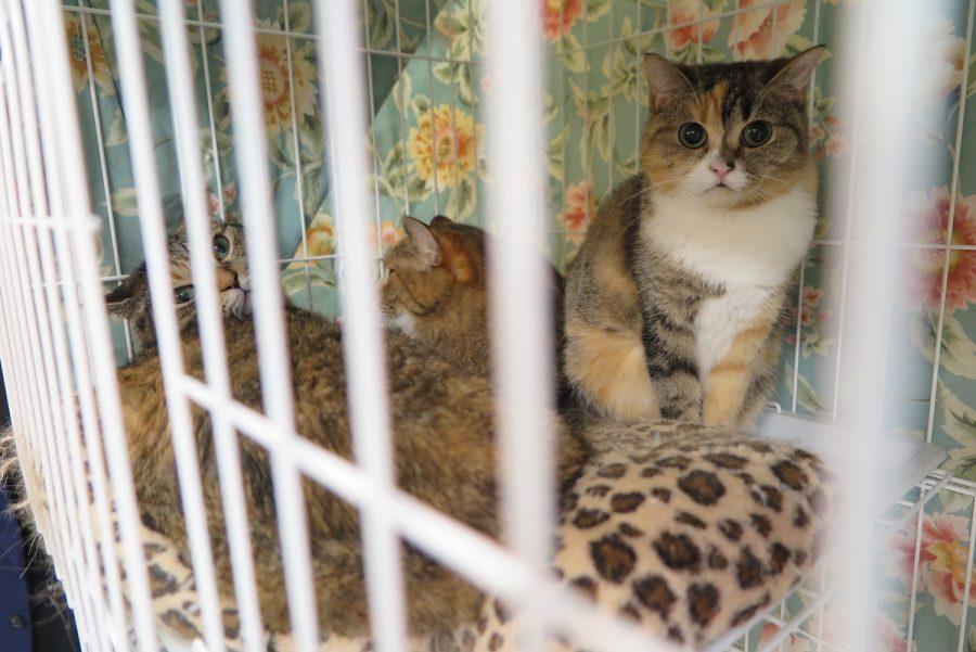 保護されている猫の様子