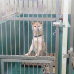 【独占取材】施設も、ボランティアも限界 「殺処分ゼロ」を掲げる神奈川県動物保護センターの現状