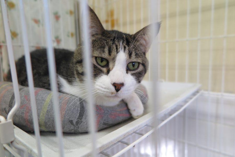 神奈川動物保護センターの猫