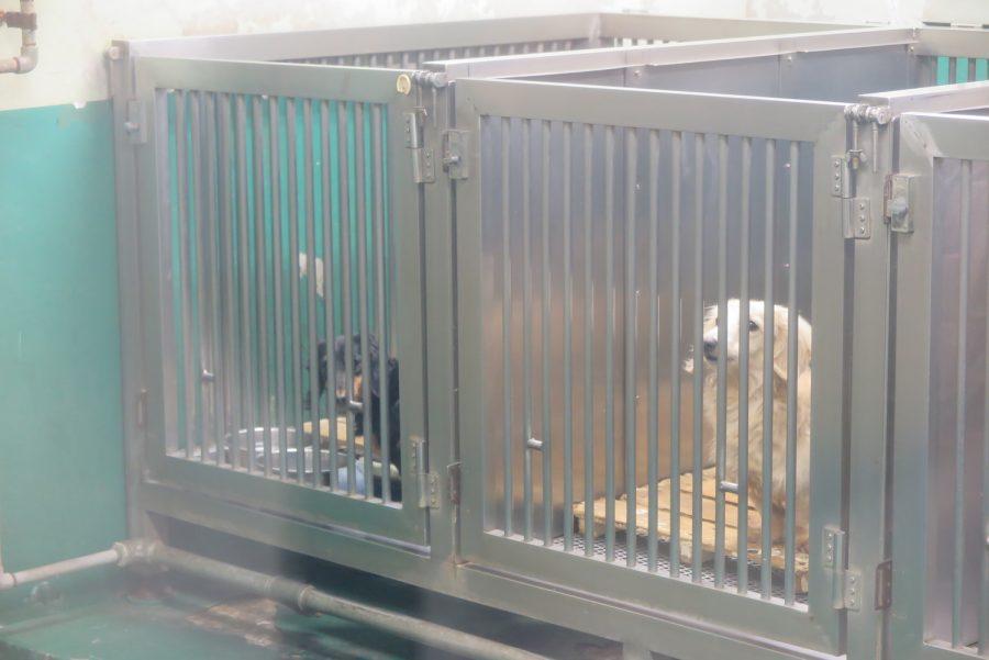 神奈川県動物保護センター