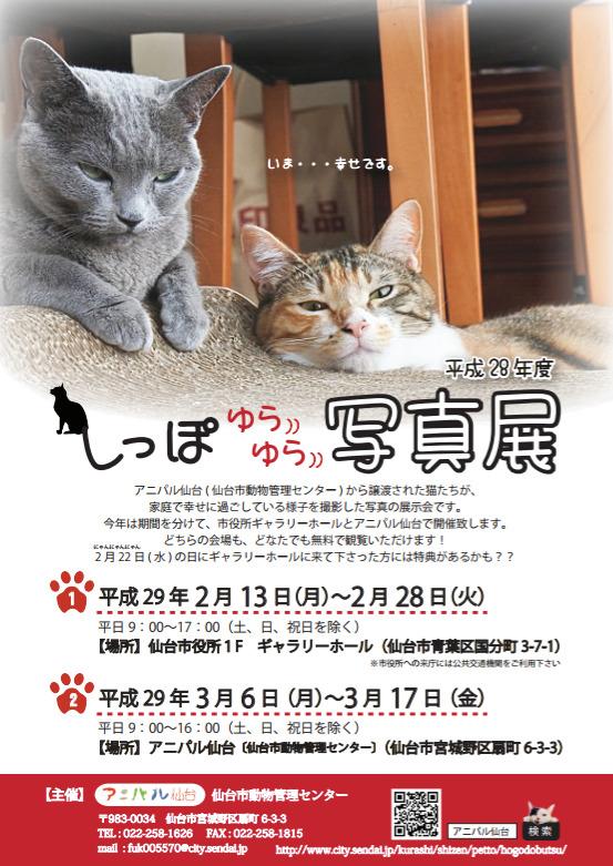 20170222_nekonohi_ky_007