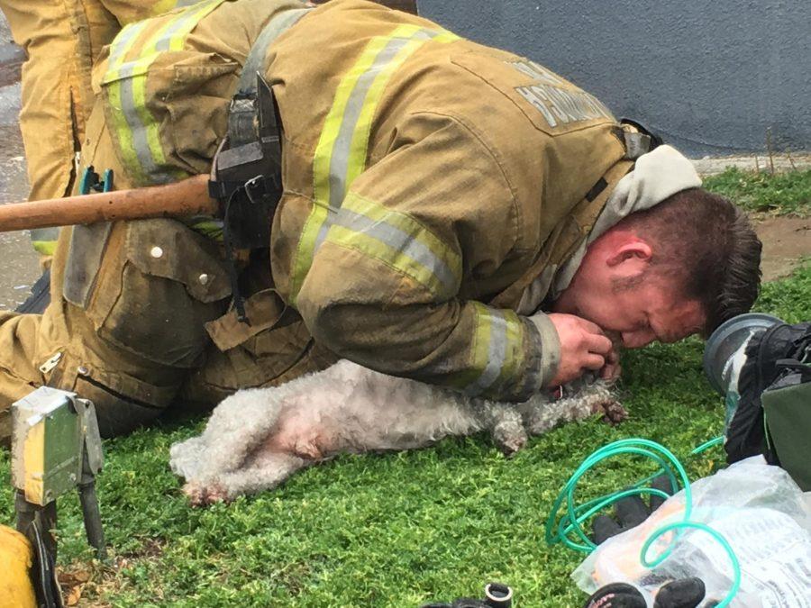 消防士が犬の鼻に人工呼吸を施す様子